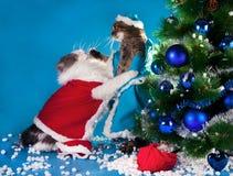 Buon Natale! fotografia stock libera da diritti