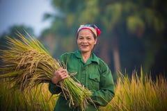 Buon sorriso del raccolto Fotografia Stock Libera da Diritti