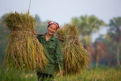 Buon sorriso del raccolto Immagine Stock Libera da Diritti