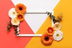 Buona Festa della Mamma, il giorno delle donne, giorno di biglietti di S. Valentino o compleanno che vive Coral Pantone Color Bac fotografia stock