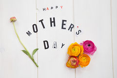 Buona Festa della Mamma lettere e ranunculus Immagini Stock