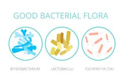 Buona flora batterica Lattobacilli, bifidobacteria, escherichia royalty illustrazione gratis