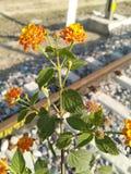 Buona pianta un certo piccolo fiore immagine stock