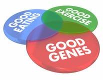 Buoni geni che mangiano salute vivente Venn Diagram 3d Illust di lunga vita Fotografia Stock Libera da Diritti