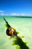 Buoy on caribbean sea Royalty Free Stock Photography