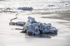 Buoy Rope. Washed Ashore Salinas Beach Royalty Free Stock Photo