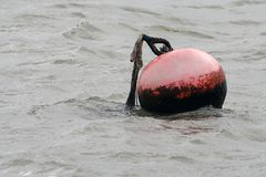 Buoy in sea Royalty Free Stock Image