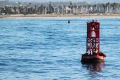 Buoy Sea Lions Royalty Free Stock Photography