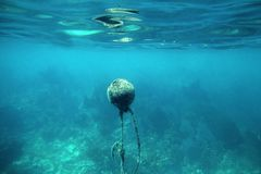 Buoy with seaweed underwater image Stock Photos