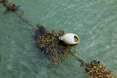 Buoy with seaweed used for mooring Royalty Free Stock Photo