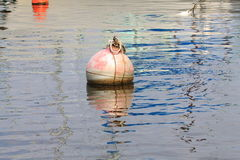 The buoy in water Stock Image