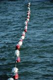 Buoys on the water Stock Photography