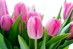 Zacken Sie Tulpen aus Lizenzfreies Stockbild