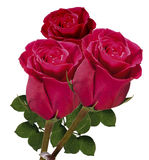 Buquet of red roses Stock Images