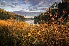 Bur在河附近的另一棵金黄秋天草 免版税库存照片