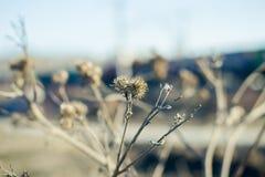 Bur в сухой траве в предыдущей весне Стоковое Изображение RF