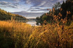 Bur another golden autumn grass near the river Royalty Free Stock Photo