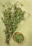 Bur marigold. Dried herbs. Herbal medicine, phytotherapy medicin Stock Photos