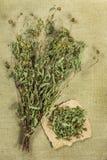 Bur marigold. Dried herbs. Herbal medicine, phytotherapy medicin Royalty Free Stock Photo