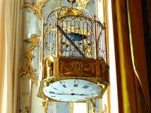 Bur med en fågel royaltyfria bilder