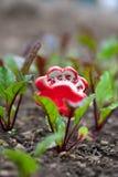 Buraki Uprawiają ogródek markiera obrazy stock