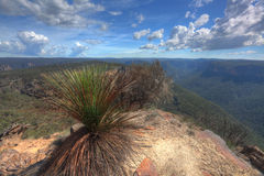 Buramoko Ridge Blue Mountains National Park Australia Stock Image