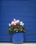 Burano, Venezia, Italia Fotografia Stock