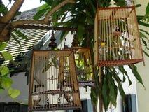Burar med fåglarna på gatan för Luang Prabang ` s, Laos Fotografering för Bildbyråer