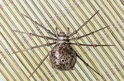 Burattini del ragno del ferro Immagine Stock Libera da Diritti