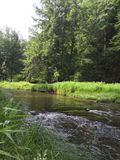 Burbling creek in the forest Stock Image