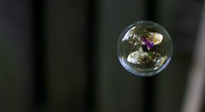 Burbuja de jabón Fotos de archivo libres de regalías