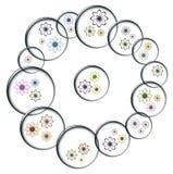 Burbujas con las flores del color Imagen de archivo libre de regalías