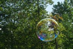 Burbujas de jabón en el fondo de árboles imagen de archivo