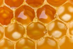 Burbujas de la miel en cera de abejas Foto de archivo libre de regalías