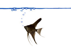 Burbujas de los pescados y de aire. Imagen de archivo libre de regalías