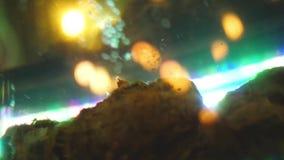 Burbujas en acuario en el fondo de las luces del bokeh Cap?tulo Jet de levantamiento de las burbujas del primer para arriba en ac metrajes