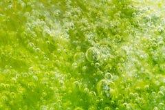 Burbujas en alga marina fotografía de archivo