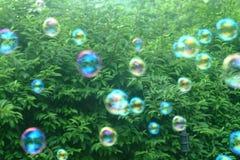 Burbujas en el jardín Foto de archivo