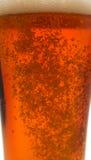 Burbujas en una cerveza Imágenes de archivo libres de regalías