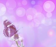 Burbujas y mariposa púrpuras Imágenes de archivo libres de regalías