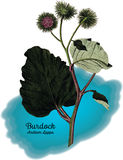burdock Images stock