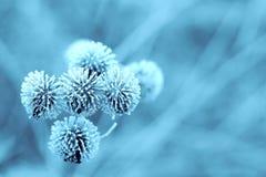Burdock azul del invierno foto de archivo libre de regalías