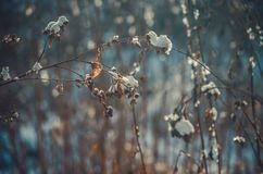 Burdock covered with snow winter background. Calm peaceful winter backdrop for sites, web pages Royalty Free Stock Images