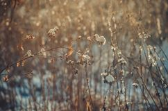 Burdock covered with snow winter background. Full of warm morning light. Calm peaceful winter backdrop for sites, web pages Royalty Free Stock Image