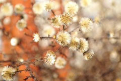 Burdock with dried flowers Stock Images