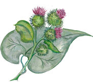 Burdock flowers with green leaf. Watercolor painting. Bitmap Royalty Free Stock Image