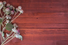 Burdock flowers. On a wooden with copy space royalty free stock images