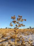 Burdock on the hill on the blue sky background royalty free stock images