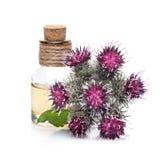 Burdock oil and burdock flowers. Bottle of burdock oil and burdock flowers royalty free stock photo