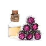 Burdock oil and burdock flowers. Bottle burdock oil and burdock flowers isolated on white background royalty free stock photos